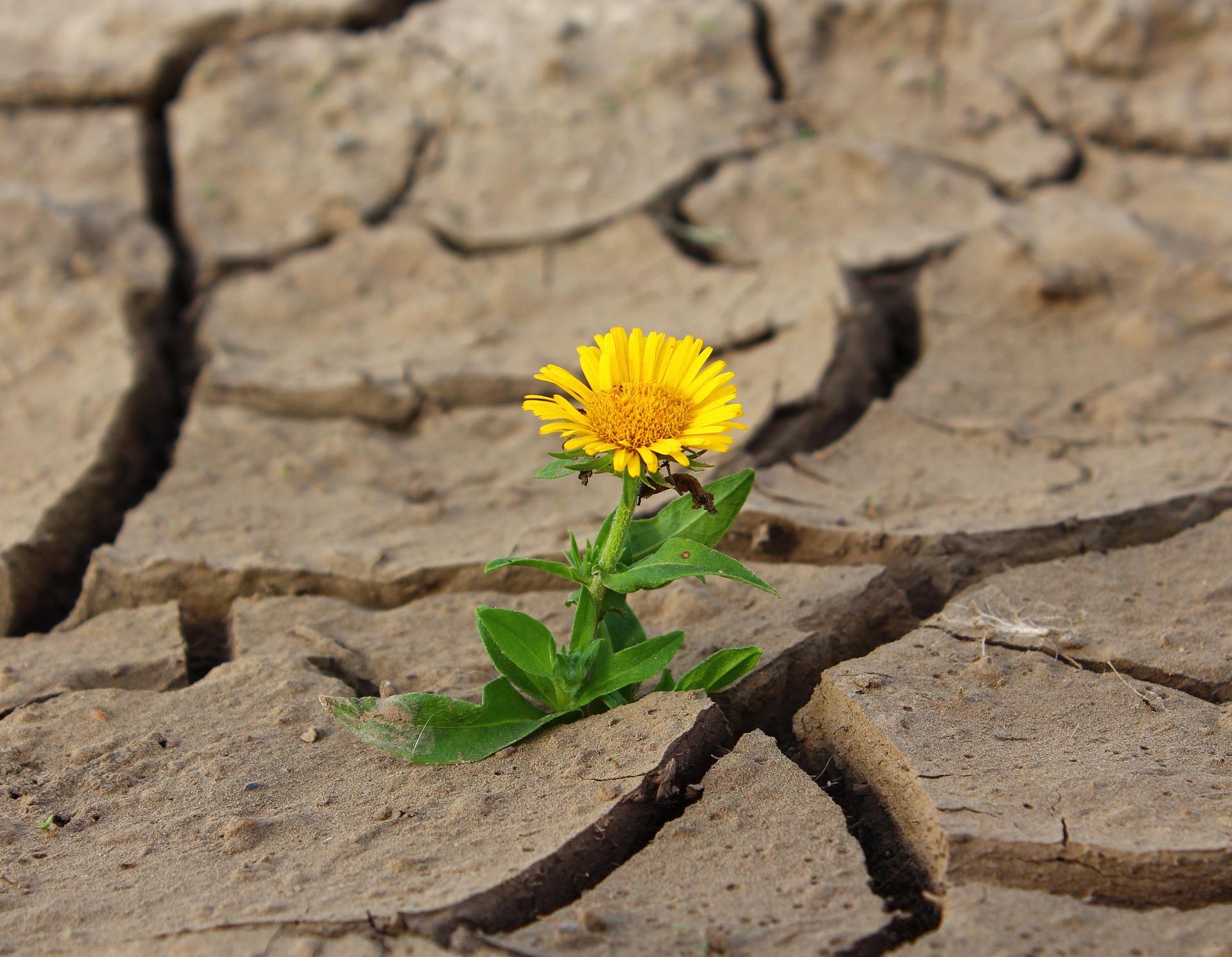 Que es la resiliencia y en que nos ayuda para ser mas felices